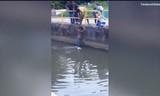 Chàng trai quên mình cứu chú chó giữa sông khiến nhiều người xúc động