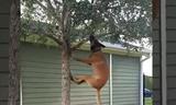 Đây là cách các chú chó... luyện cơ hàm