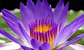 Những ngộ nhận về hoa