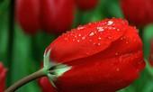 Vũ điệu của mùa xuân