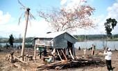 Dân đói, rừng bị tàn phá