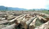 Phá rừng làm thủy điện, chây ỳ nộp phí
