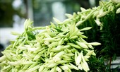Loài hoa mang dấu ấn tình yêu Hà Nội