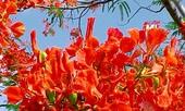 Chút lăn tăn về hoa sen
