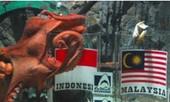 'Bạch tuộc' chọn Indonesia vô địch AFF Cup