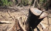 Vụ phá rừng phòng hộ tại Quảng Nam: Do buông lỏng quản lý?