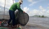 Đồng bằng sông Cửu Long bị tác động mạnh bởi biến đổi khí hậu