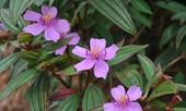 Những loại cây giải độc dễ tìm