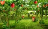Công dụng ít biết của 4 loại rau quả dân dã