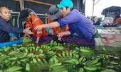 Thu nghìn tỷ từ chuối, bầu Đức trồng thêm ớt và hồ tiêu