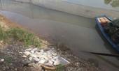 Nghệ An: Cá chết bất thường trên sông Hoàng Mai