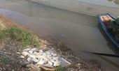 Tin mới vụ cá chết bất thường trên sông Hoàng Mai