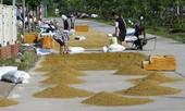 Nông dân Hà Nội 'chiếm' đường nhựa lấy chỗ phơi thóc