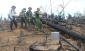 """Quảng Nam: Cận cảnh hàng trăm héc ta rừng phòng hộ bị """"cạo trọc"""""""