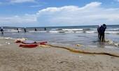 Vì sao hải sản chết trên vùng biển gần nhiệt điện Vĩnh Tân?