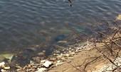 Đi câu cá, tá hỏa phát hiện thi thể nổi trên mặt nước