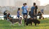 Nhiều người dân Hà Nội vẫn vô tư thả rông chó tại nơi công cộng