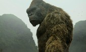 Kong: Skull Island cũng hái ra tiền ở khắp rạp chiếu thế giới