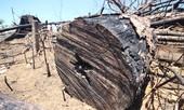 Chi Cục Kiểm lâm nói gì về vụ phá rừng phòng hộ ở Quảng Nam?