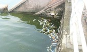 Công an điều tra việc bao cao su nổi trắng góc hồ Tây