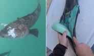Dân mạng điên đảo với cá thịt xanh lè dài đến 1m đặc biệt nhất hành tinh