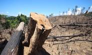 Diễn tiến mới vụ phá rừng phòng hộ quy mô lớn ở Quảng Nam