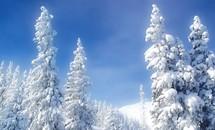 'Bà chúa tuyết' khoe nhan sắc yêu kiều