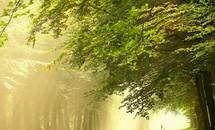 Khoảng khắc thanh bình của thiên nhiên