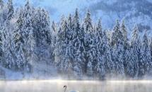 Truyện cổ tích mùa đông