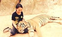 Cô gái Việt Nam sang Thái Lan... nuôi hổ