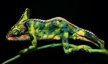 Đánh lừa người xem với nghệ thuật vẽ tranh trên cơ thể