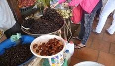 Ăn chuột Campuchia, chó nhập lậu, nhện độc ngoại