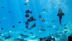 'Lạc' vào bể cá lớn nhất thế giới