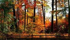 Bức tranh mùa thu tuyệt đẹp