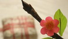 800 kiều bào sẽ dự Xuân Quê hương 2011