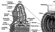 Viêm đại tràng nên chữa từ gốc hay từ ngọn?