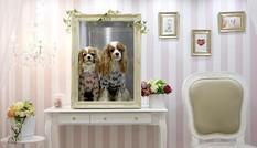 Nhật Bản mở triển lãm dành cho thú cưng