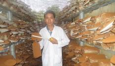 Ông chủ nấm nuôi mộng xuất khẩu