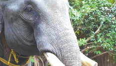 Kỳ bí chuyện săn voi giữa đại ngàn