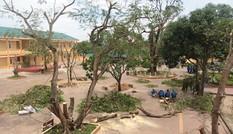 Nghệ An: Sau bão, 100% học sinh đã đến trường