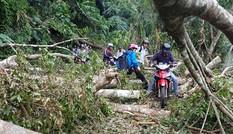 Đường 20 - Quyết Thắng ngổn ngang cây đổ như rừng rậm sau bão