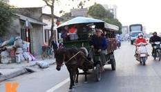 10 năm chạy xe ngựa đưa đón học sinh đến trường