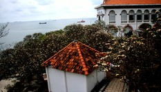 Rừng hoa sứ nơi vua Thành Thái bị giam lỏng nở hoa tuyệt đẹp
