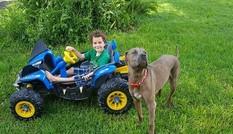 Chó pitbull dũng cảm cắn chết rắn hổ mang để bảo vệ chủ