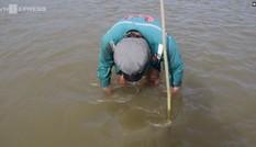 Đặt ống tre bẫy cá bống dưới sông Trà Khúc