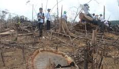 Bắt giữ nghi can phá rừng phòng hộ tại Quảng Nam