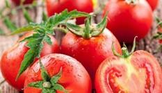 Dưa hấu và cà chua giúp tăng 70% lượng tinh trùng