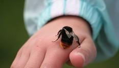 Cách 'giải độc' bị côn trùng cắn, đi du lịch nên biết
