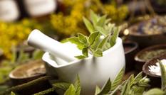 Chữa sốt xuất huyết hiệu quả nhờ bài thuốc từ cây cỏ