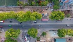 Con đường có 1300 cây xà cừ trong những ngày nắng nóng đỉnh điểm